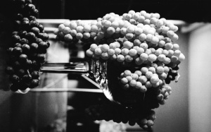 ws_Grape_cluster_black_and_white_1920x1200